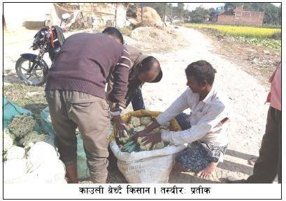 किसानका लागि स्थानीय पालिकाले बजेट खुम्च्याउँदै छन्