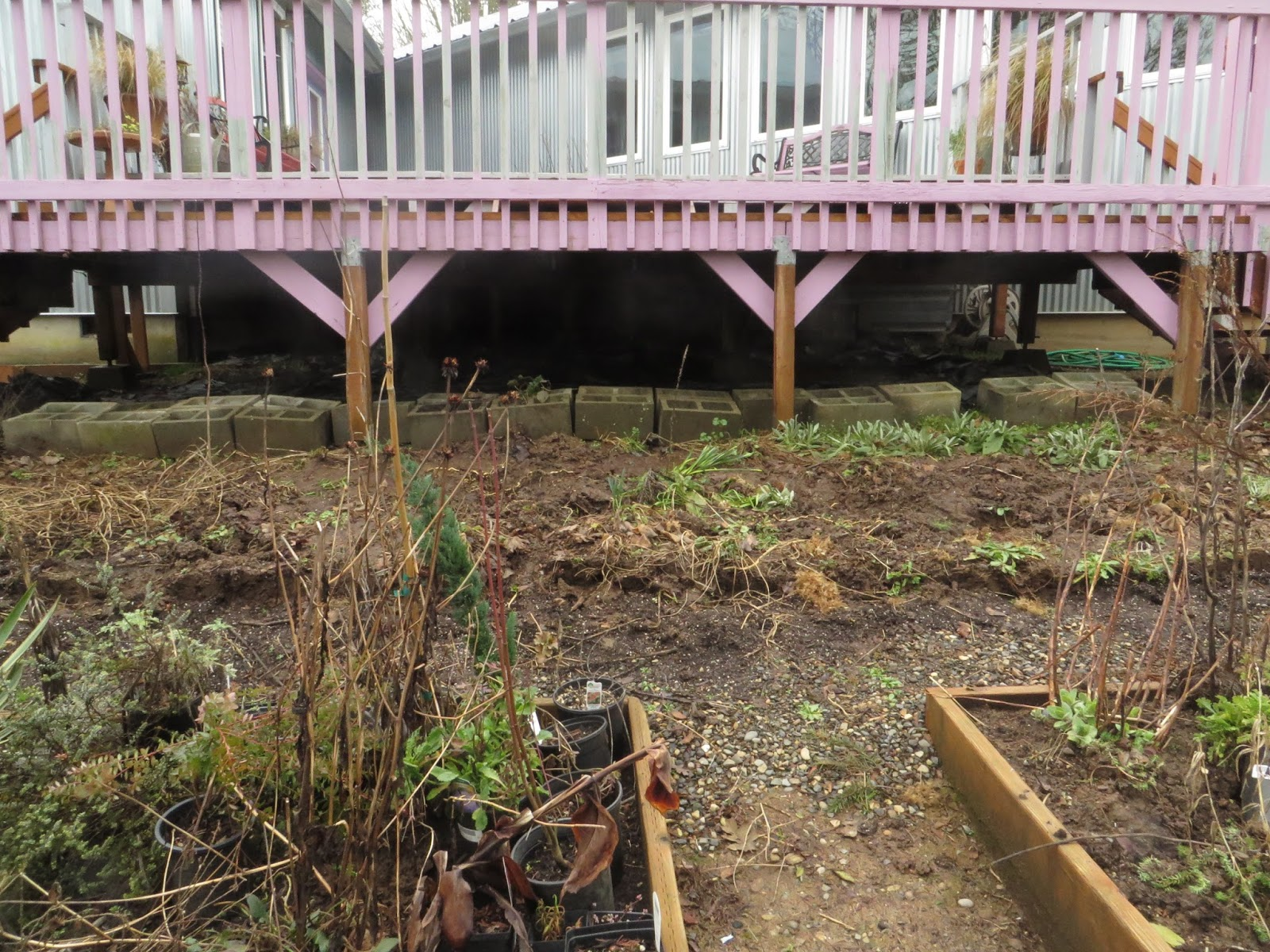 Before and After: The Gravel Garden Emerges