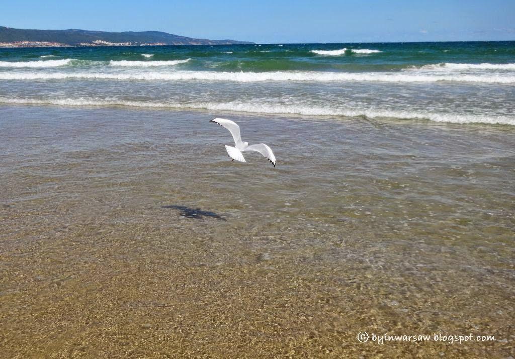 чайка на черном море