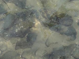 Photograph of rocks submerged in water at Rawai beach ( Phuket ) , by Manju Panchal