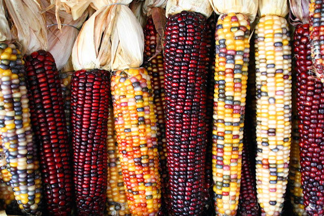 Healthy Heart and Gain Weight with Corn Consumption