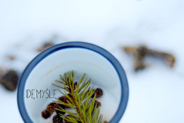 herbata z ogniska, owoce głogu przepis, świerk jadalny, jadalne drzewa iglaste