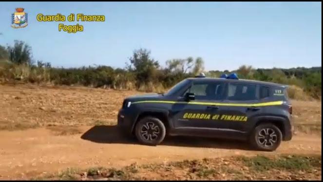 Guardia di Finanza di Foggia: sequestrate due piantagioni di marijuana. Avrebbero fruttato oltre 500mila euro. (VIDEO)