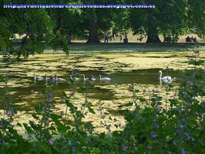 Lago del parque de St. James