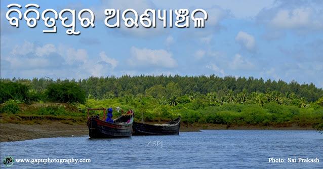Bichitrapur Mangrove, Balasore, Odisha