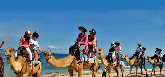 you lot tin flame endeavor the thrill of riding a camel inwards Sawangan beach of Nusa Dua BeachesinBali; Ride Influenza A virus subtype H5N1 Camel In Bali