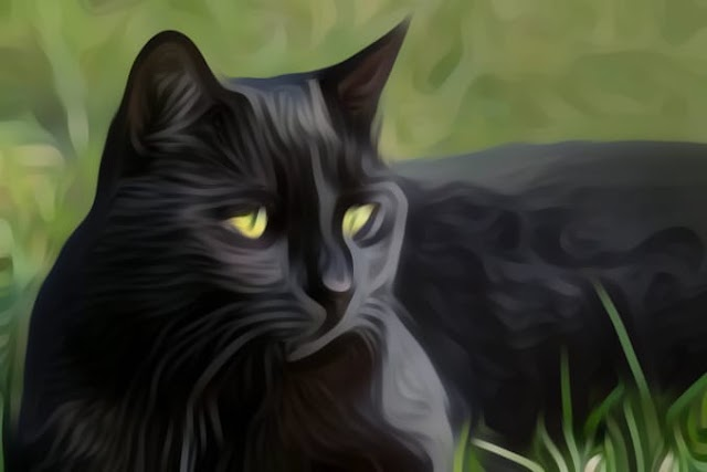 A black cat crosses your road-Bad luck?? myth or fact?