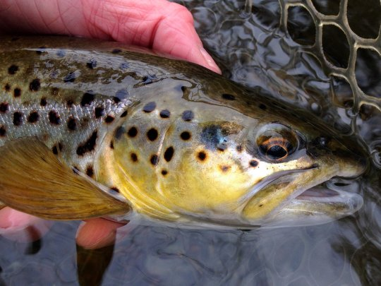 The lastest news on Rose River Farm, a private fly fishing.
