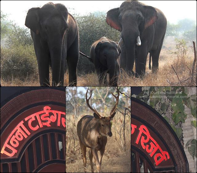 Panna Tiger Reserve, Madhya Pradesh