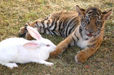 La estrategia del conejo