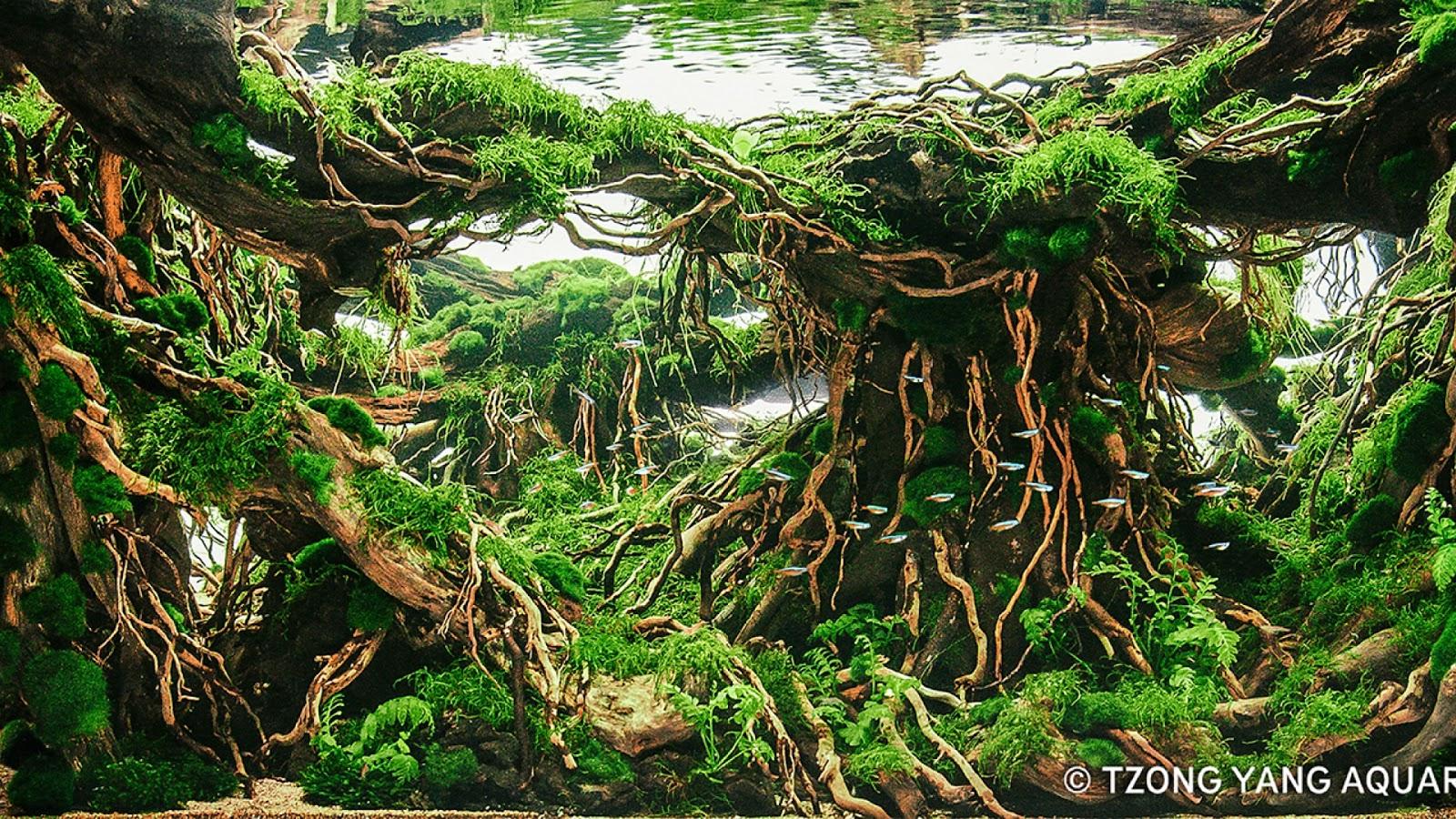 Một bể thủy sinh có cây dương xỉ lá me tại cuộc thi IIAC 2016
