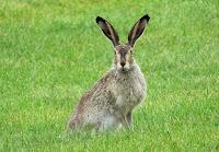 poslovicy-pogovorki-zajac