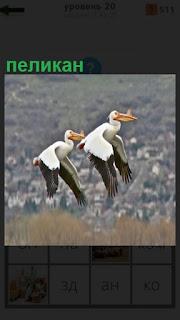 взлетели два пеликана и размахивают крыльями