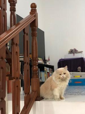 The Frakarsas' cats