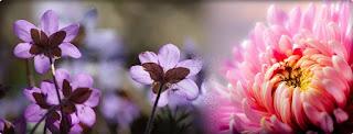 Gambar bunga Untuk Cover  Facebook Anggrek
