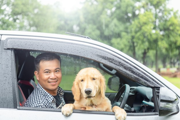 6 Tips For Safe And Secure Car Travel With Pets