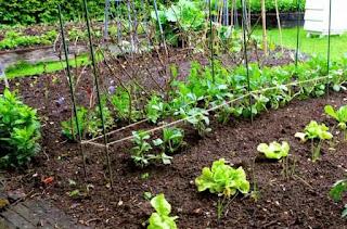 Alan Titchmarsh veg patch