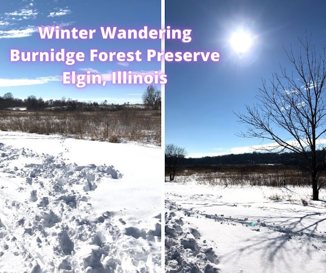 Winter Rambling Through a Tranquil Landscape at Elgin's Burnidge Forest Preserve