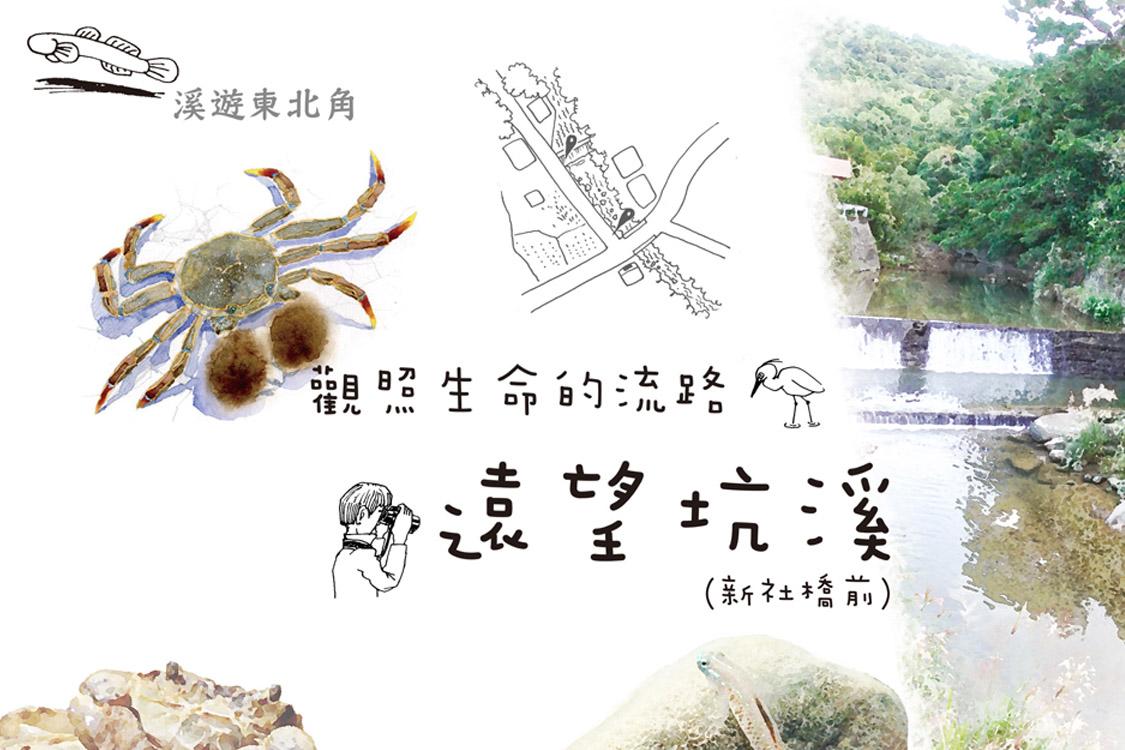 遠望坑溪(新社橋前)
