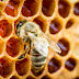 Miele: in Val d'Orcia raccolti prossimi allo zero
