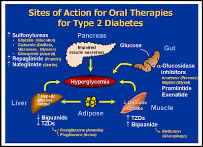 Oral Therapies for Type 2 Diabetes
