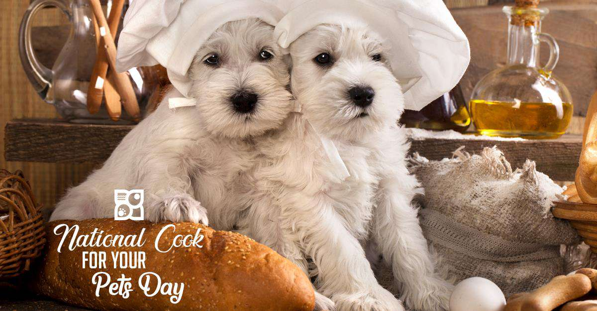 National Cook For Your Pets Day Wishes