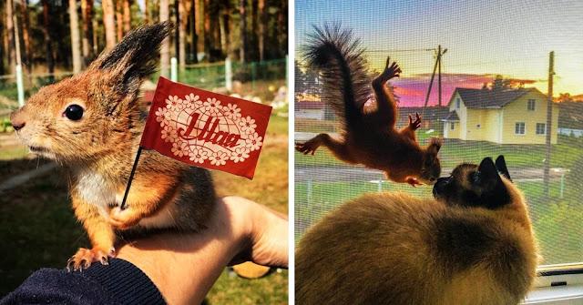 Житель Карелии спас бельчонка, и теперь зверёк живёт у него дома, ест орешки и дружит с кошкой