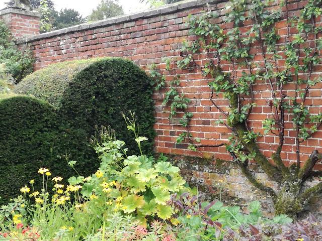 drzewo owocowe na murze, angielski ogród