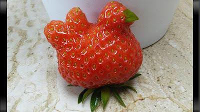 strawberry berbentuk seperti induk ayam mengeram