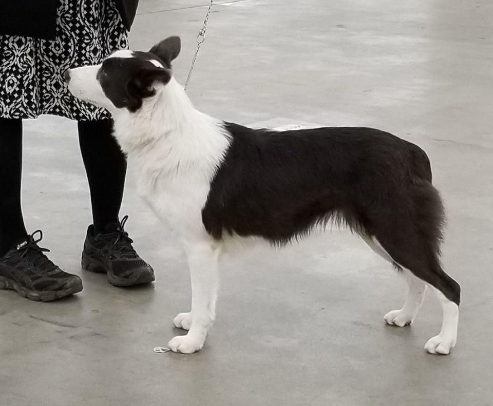 The Modern Bark | Dog Training Tips: 99 Names for Female