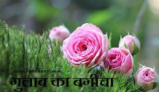 गुलाब का बगीचा