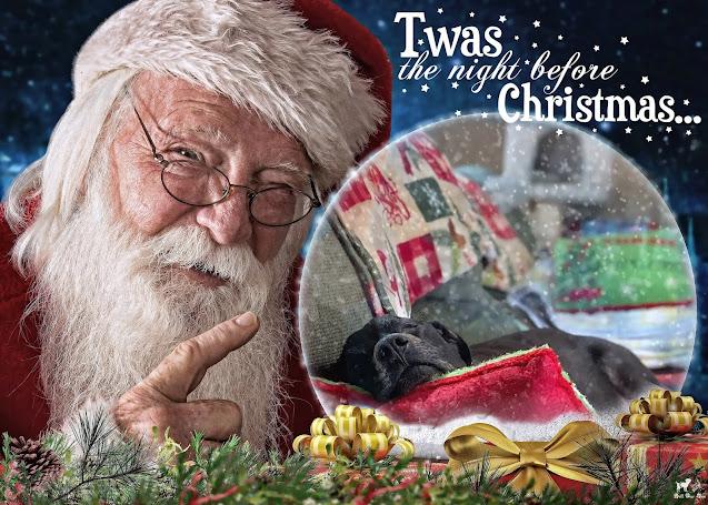 Matt Christmas Eve 2020 (©Jenny Bell @ Bell Fur Zoo)