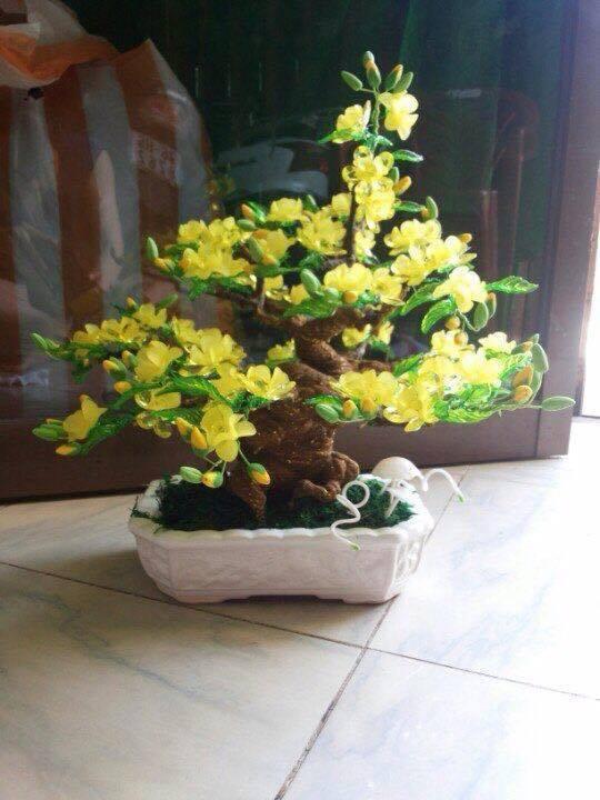 Goc bonsai mai dao o Ma Tuong