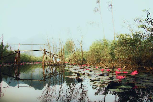 Khám phá Suối Yến chùa Hương và mùa hoa súng nở
