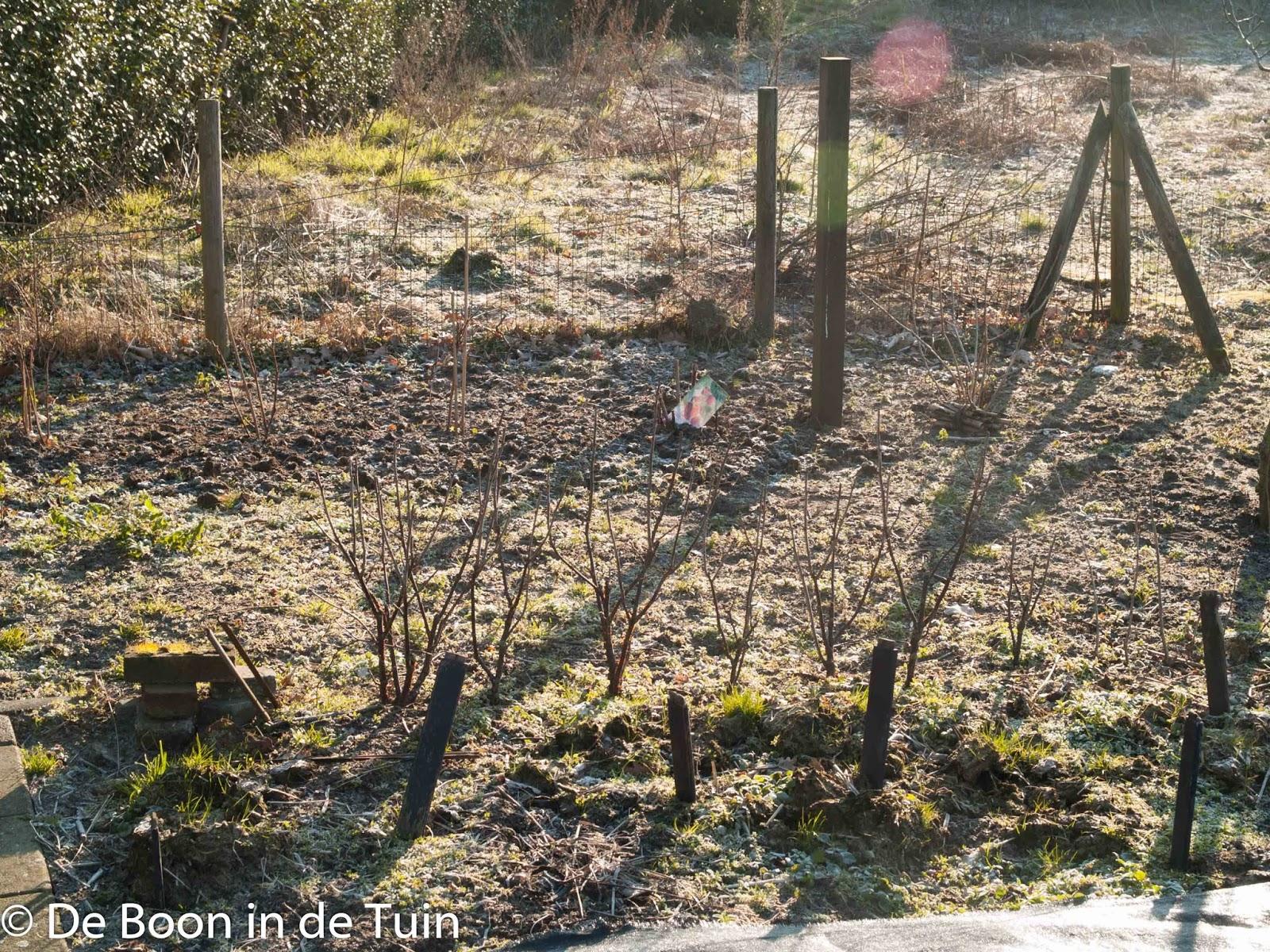bessen frambozen winter vorst moestuin volkstuin