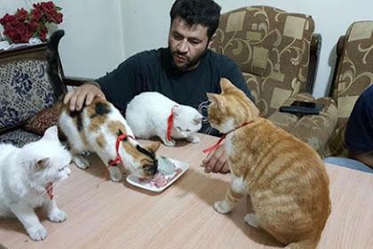 Kucing Datang saat Kita Makan, Apa Maknanya?