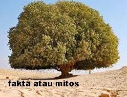 https://faktaataumitosyo.blogspot.com/2018/05/fakta-atau-mitos-berdiri-di-bawah-pohon-saat-malam-hari-bisa-dibius-setan.html