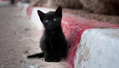¿Por qué se asocia a los gatos negros con la mala suerte?