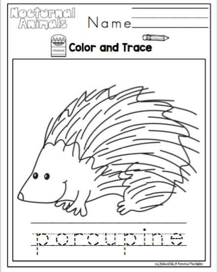 Nocturnal Animals Printable (Redone) ~ Preschool Printables