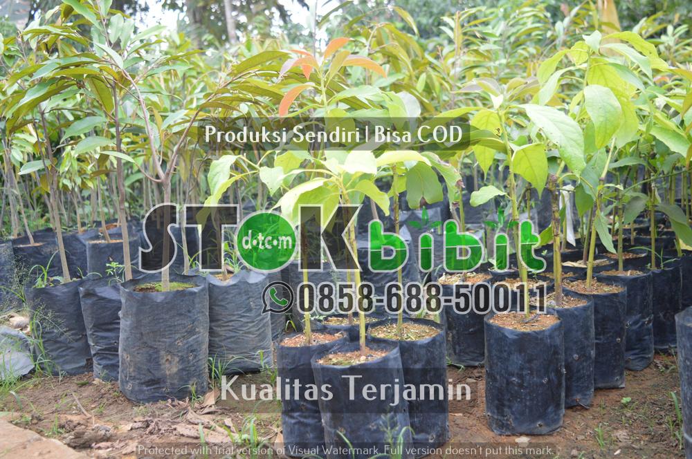 Bangun Kesadaran Arti Pentingnya Pohon Bagi Kehidupan      Lengkap     Grosir