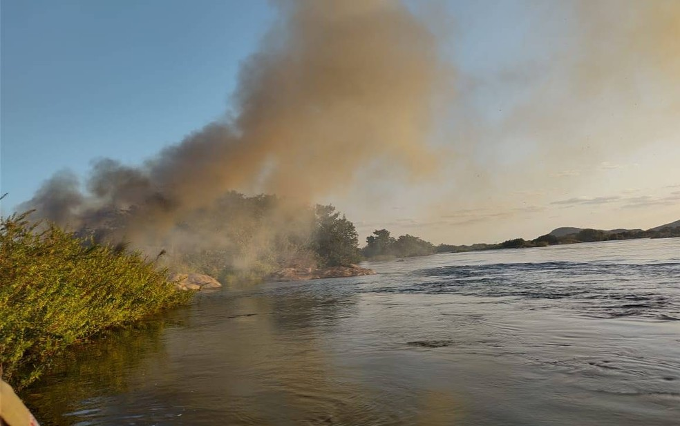 Polícia incinera 39 mil pés de maconha em área às margens do Rio São Francisco