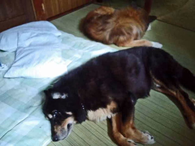 two dogs guard master's bed, futon