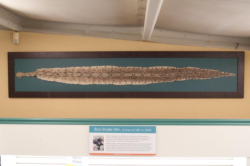 Boa snake skin at unclaimed baggage store