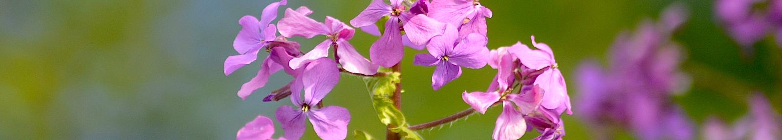 Цветы Глебу Травину.