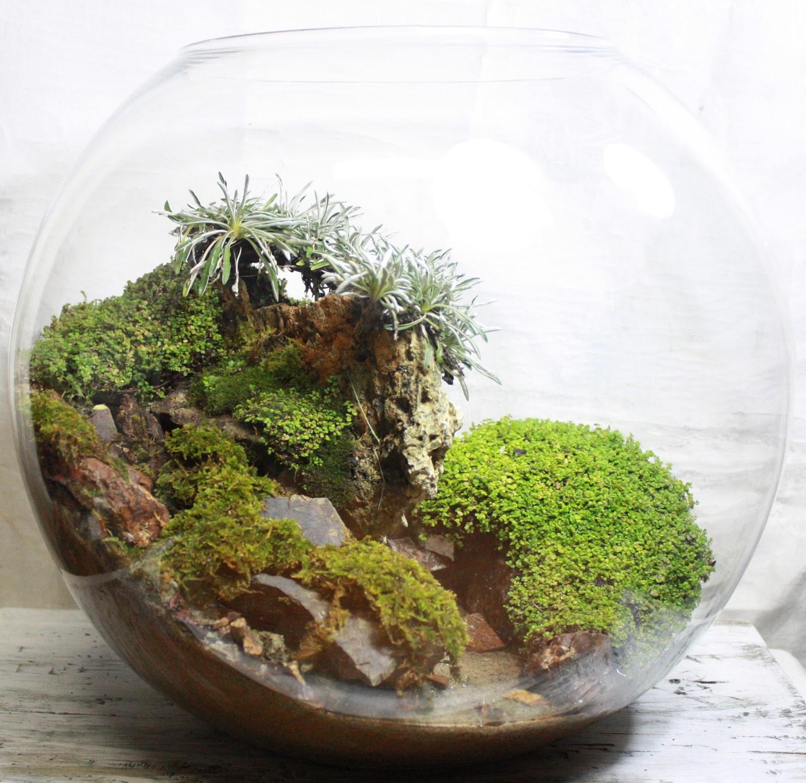 1000 images about terrariums bonsai aqua terrariums on. Black Bedroom Furniture Sets. Home Design Ideas