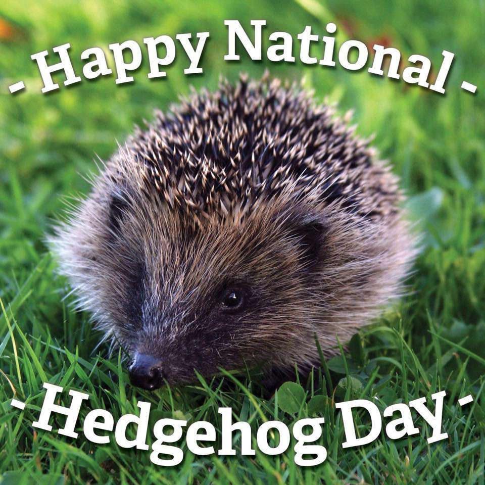 National Hedgehog Day Wishes for Whatsapp
