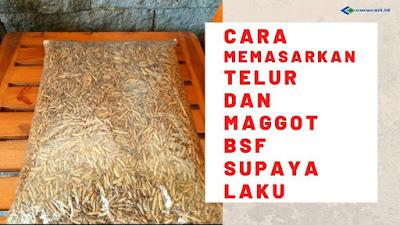 Cara Memasarkan Maggot dan Bibit Telur BSF Agar Laku