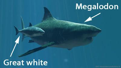 Ukuran Hiu Megalodon