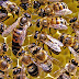 मधुमक्खी शहद के अलावा फसल उत्पादन में भी सहयोगी