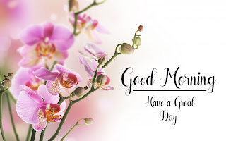 Good Morning Royal Images Download for Whatsapp Facebook24